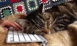 A cat sleeps on the keyboard while a writer tries to write
